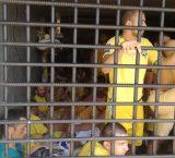 Familiares solicitan al gobierno  despistaje masivo en calabozos de Zulia