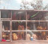 Zulia: Infraestructuras inadecuadas se convierten en caldo de cultivo de enfermedades para los privados de libertad
